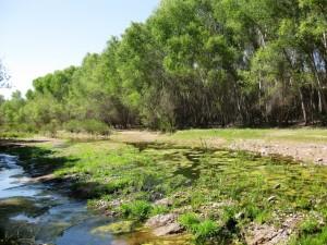 Lower-San-Pedro-River1