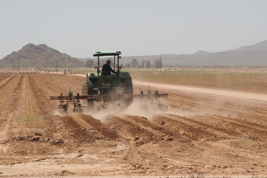 A tractor plows a field in Maricopa. / Photo by Summer Pauli