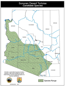 Sonoran Desert Tortoise habitat map
