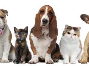 Pet Club
