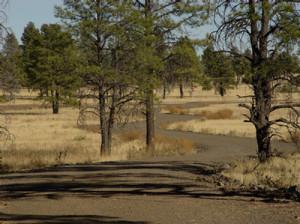 McMillan Mesa Flagstaff