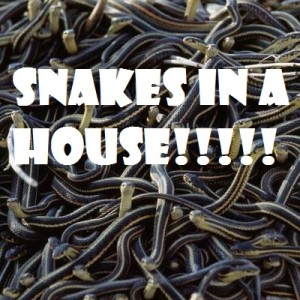 snakes in a house