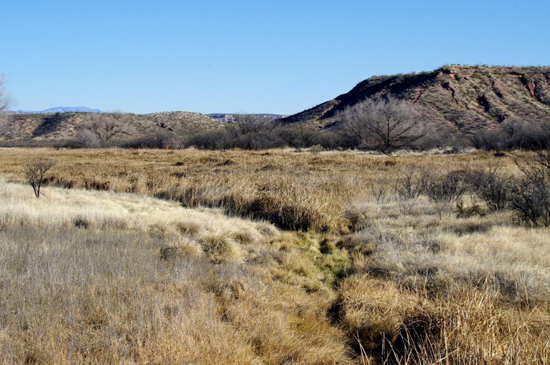 The Saint David Cienega is a remnant of what was once a large system of marshes located here along the San Pedro River.
