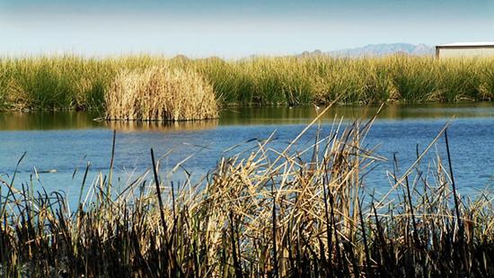 The San Pedro flows through Sierra Vista/AZPM staff