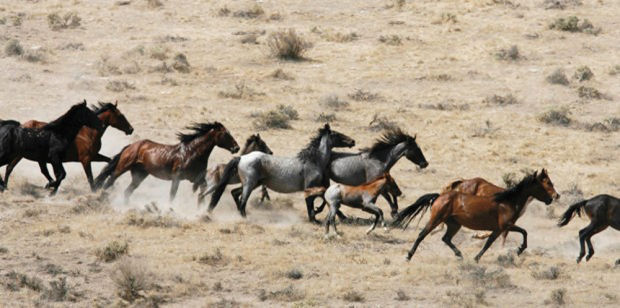 claim-the-u-s-bureau-of-land-management-blm-has-voted-to-euthanize-44000-wild-horses
