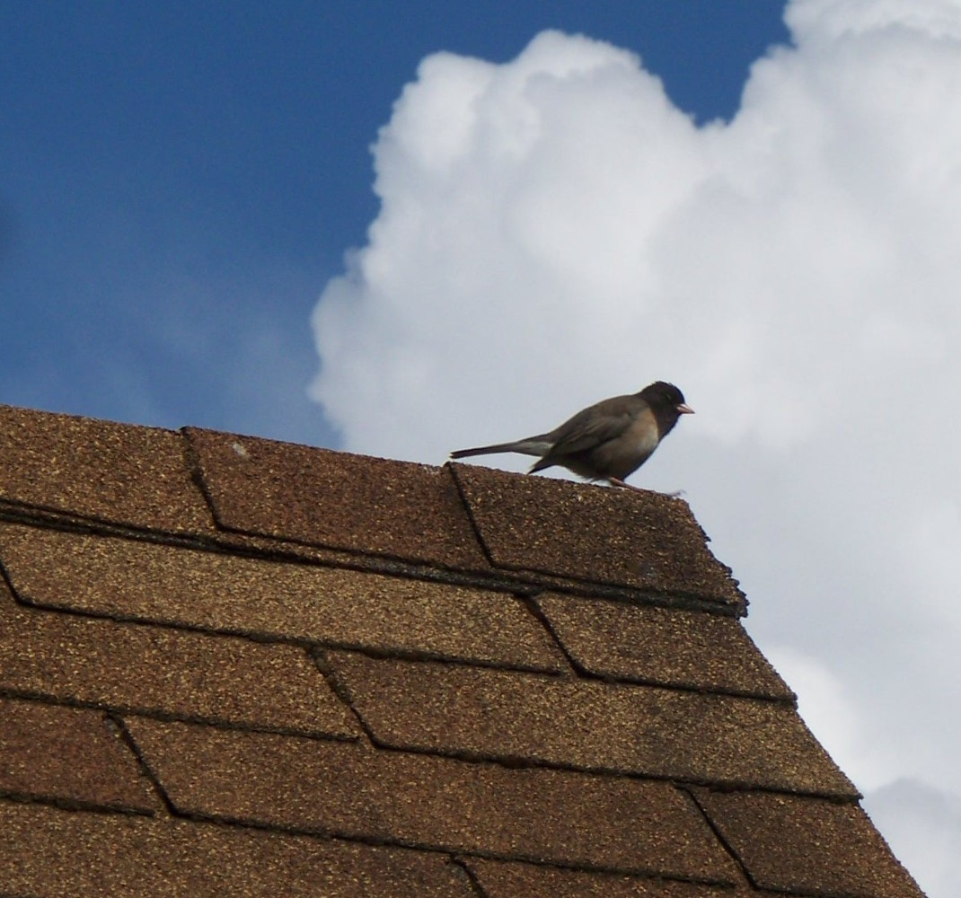 Pros And Cons Asphalt Shingles Vs Metal Roof Rose Law
