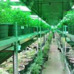 Tucson man wants to bring a marijuana dispensary to Parker